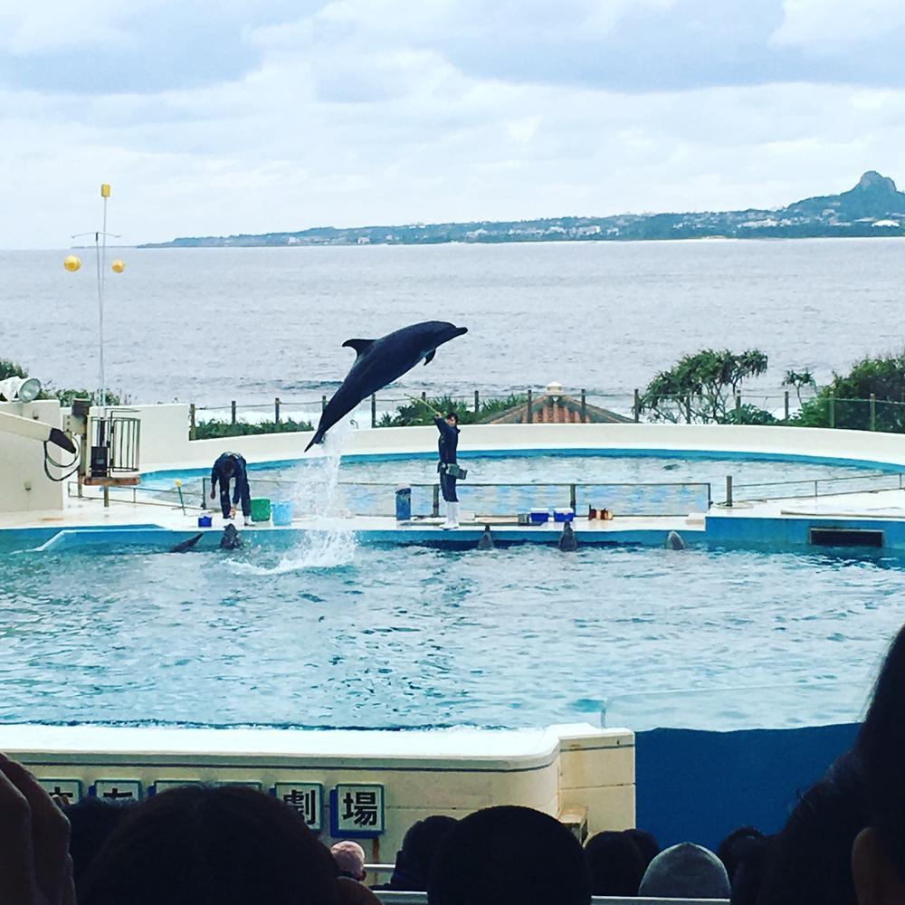 めるさんの沖縄美ら海水族館への投稿