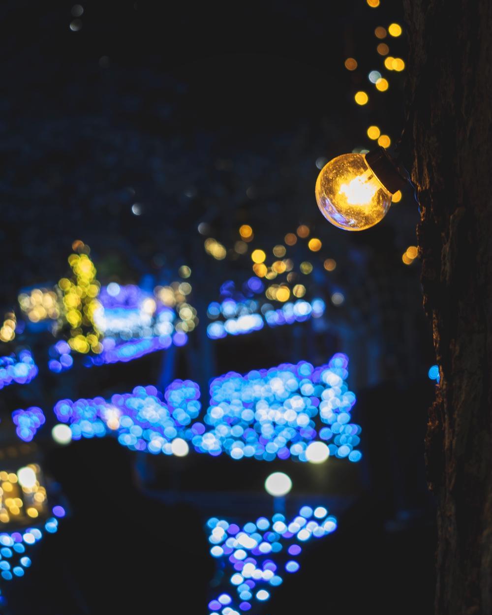 Yuta Kumagaiさんの湘南の宝石〜江ノ島を彩る光と色の祭典 2018への投稿