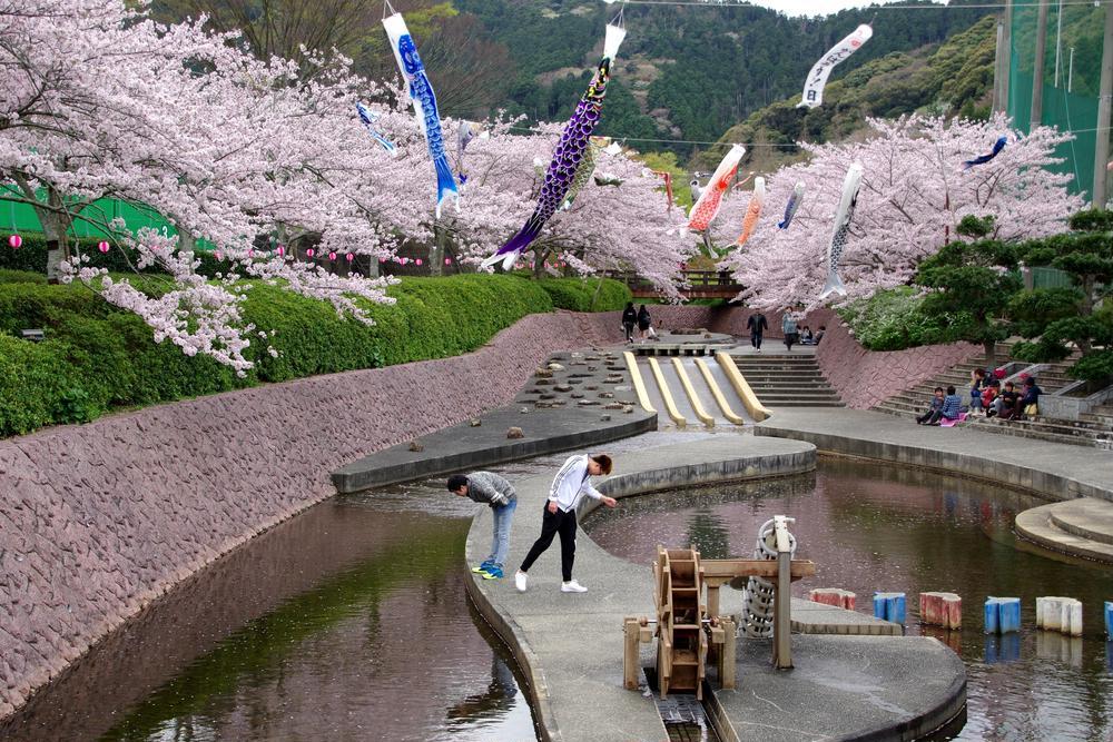 なべ一号さんの滝頭公園の桜への投稿