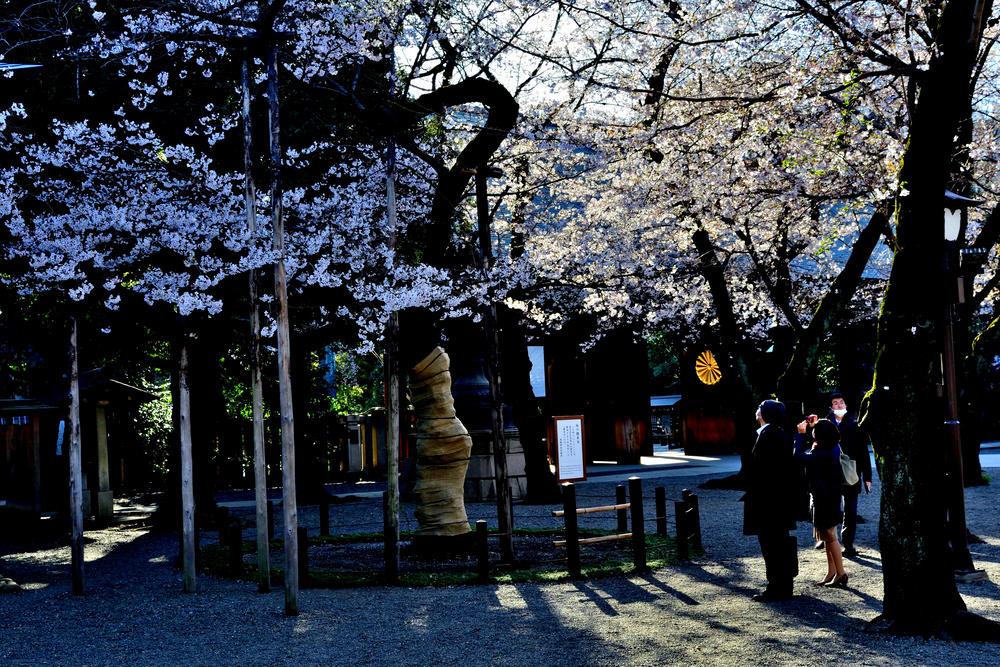 TKIOさんの靖国神社の桜への投稿