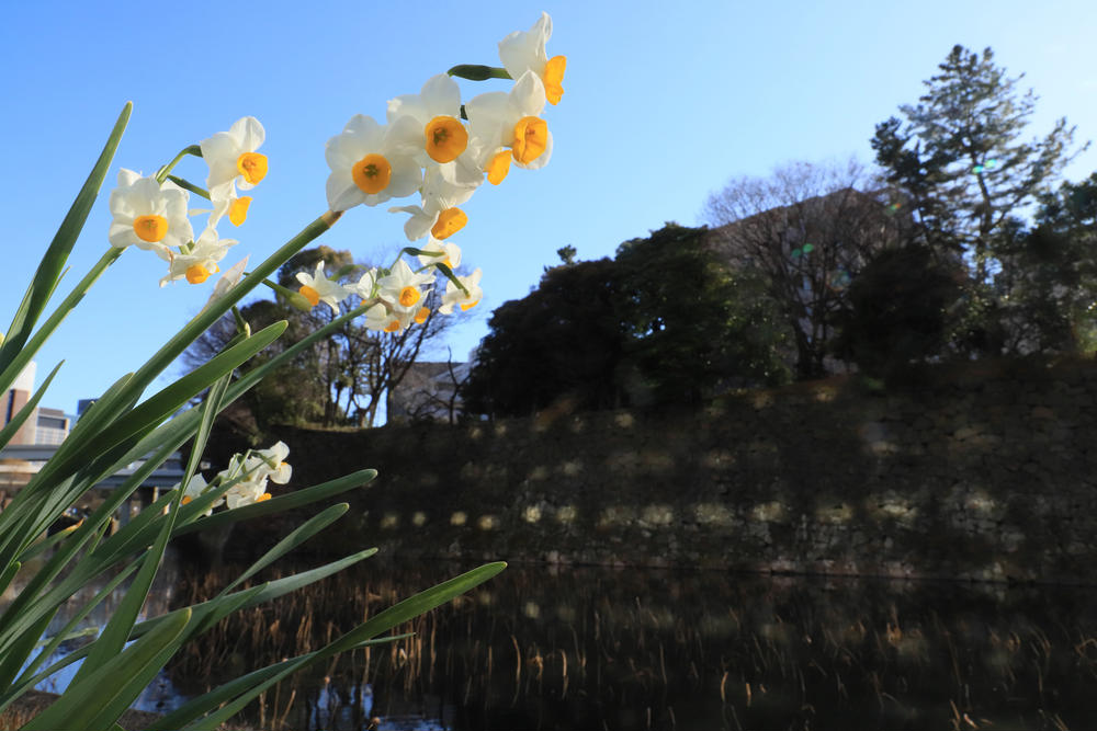ヒデキチさんの千代田区役所前への投稿