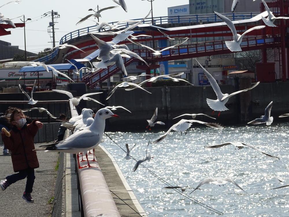 ケンサンさんの長洲港みなと憩い広場への投稿
