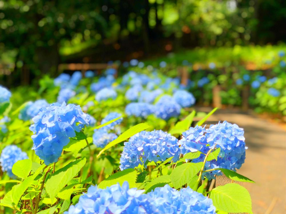 まほさんの多摩川台公園への投稿