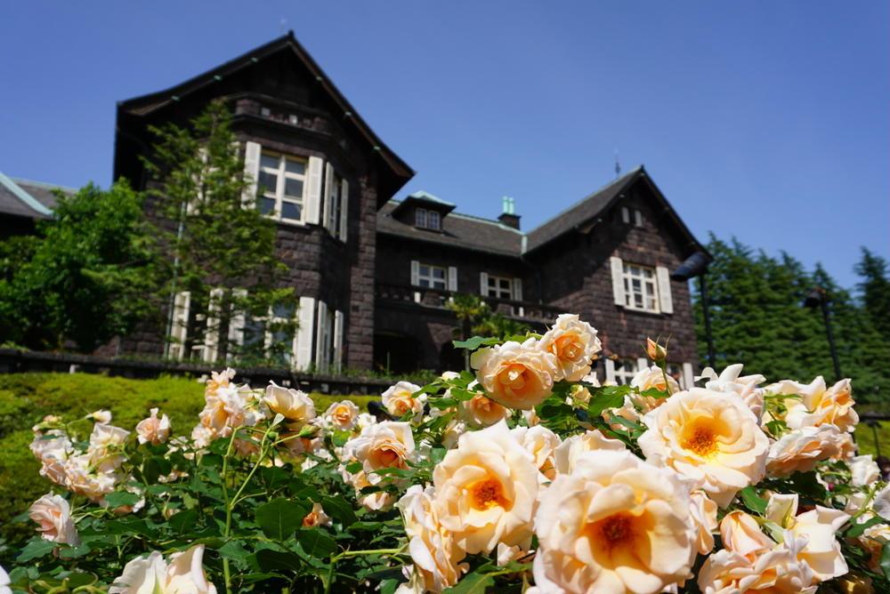 本間沙智子さんの旧古河庭園のバラへの投稿
