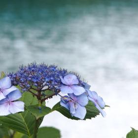 もーさんの五色沼湖沼群への投稿