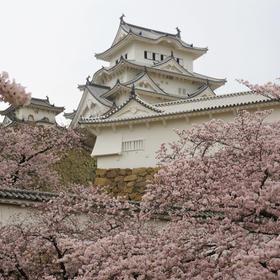 UCさんの姫路城の桜への投稿